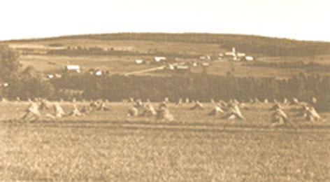 Champ cultivé, vue sud